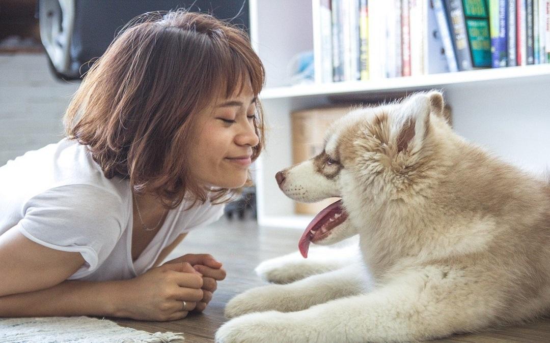 Gerstenkorn beim Hund